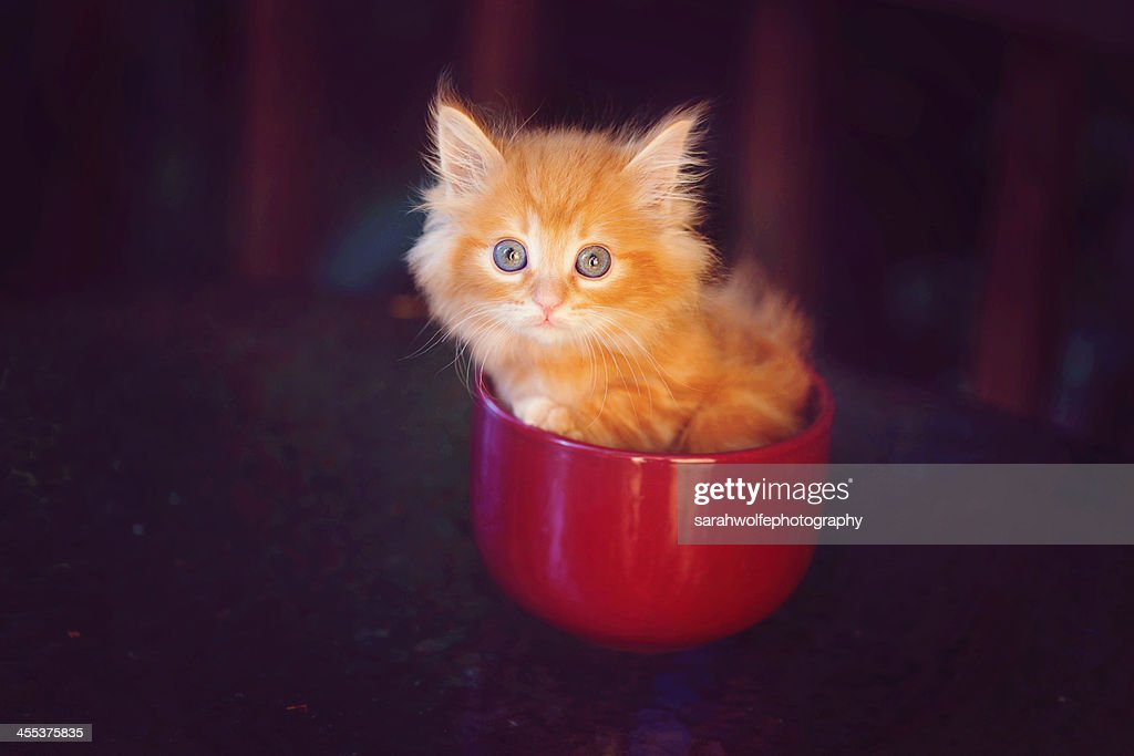 Cup o Kitten