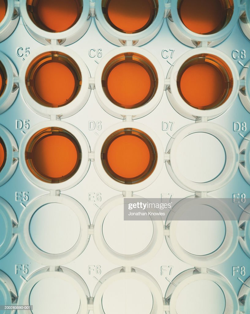 Orange liquid in wells of microtiter plate, close-up, elevated view
