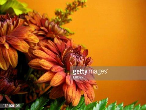 Orange Mum
