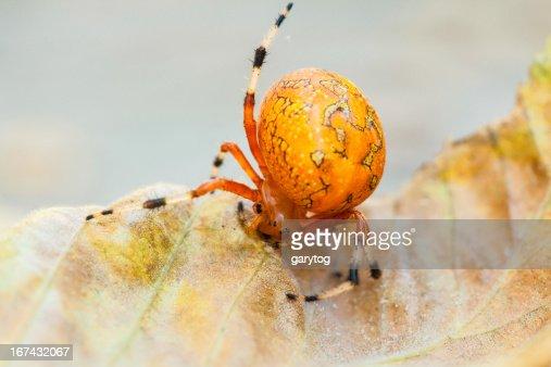 Orange Orb : Stock Photo