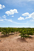 Orange orchard, Valencia Spain