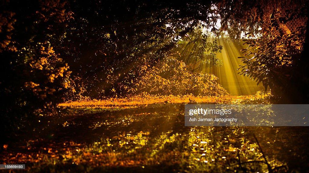 Orange ray's : Stock Photo