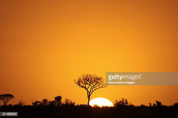 Orange sunrise silhouetting Kruger Park, South Africa