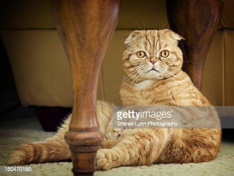 Orange tabby cat : Stock Photo