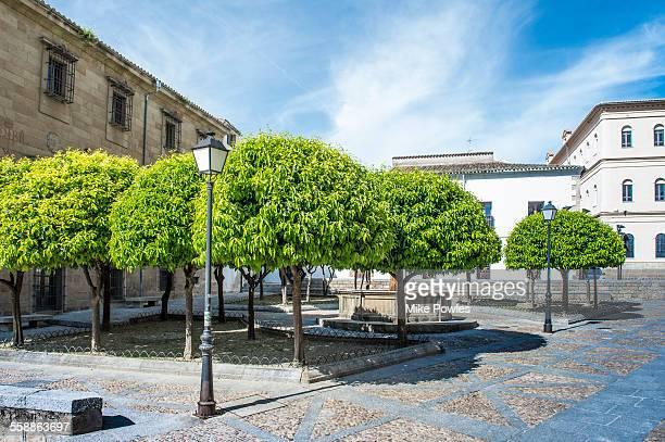 Orange trees Spain