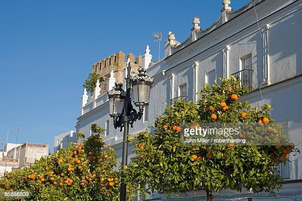 Orange trees, Vejer de la Frontera, Andalucia, Spain, Europe