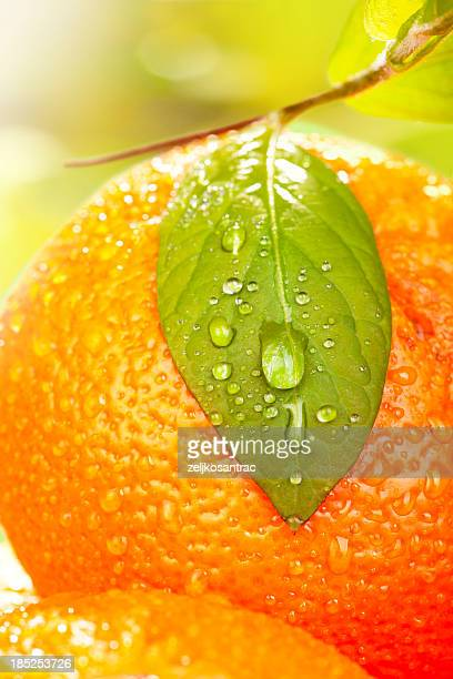 Oranges and leaf