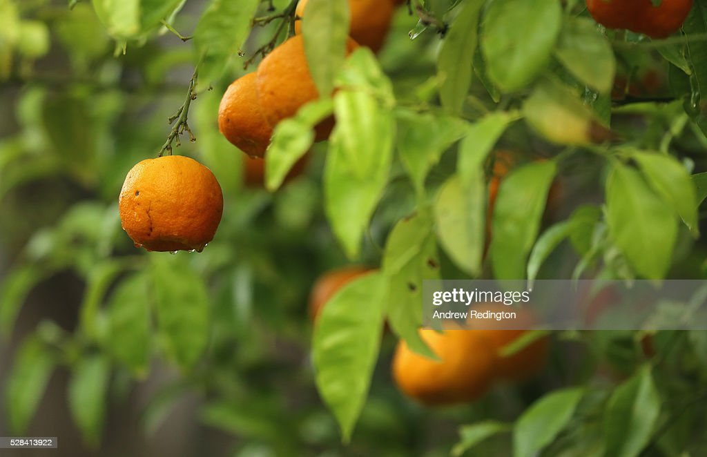Oranges during the first round of the Trophee Hassan II at Royal Golf Dar Es Salam on May 5, 2016 in Rabat, Morocco.
