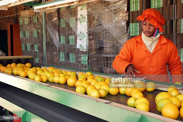 Oranges on Packing Line