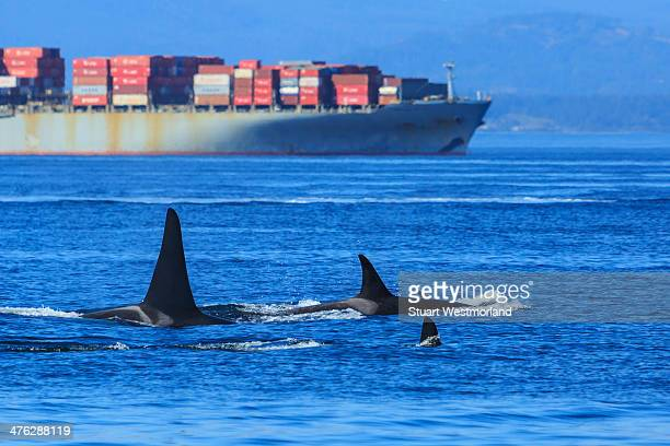 Orcas and industry