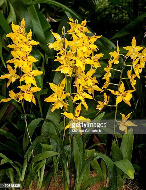 Orchid display Singapore Botanic Gardens
