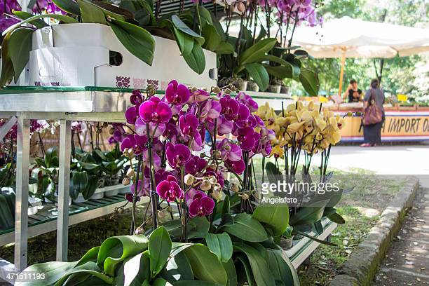 Orchid exhibition in Naples