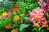 Orchid Garden in public Botanic Garden of Singapore