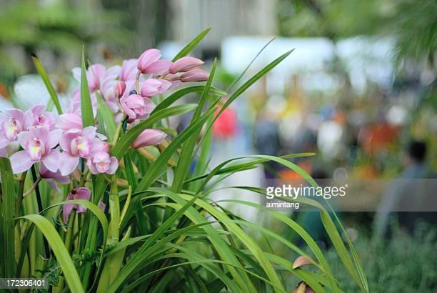 Orchidee-Karte