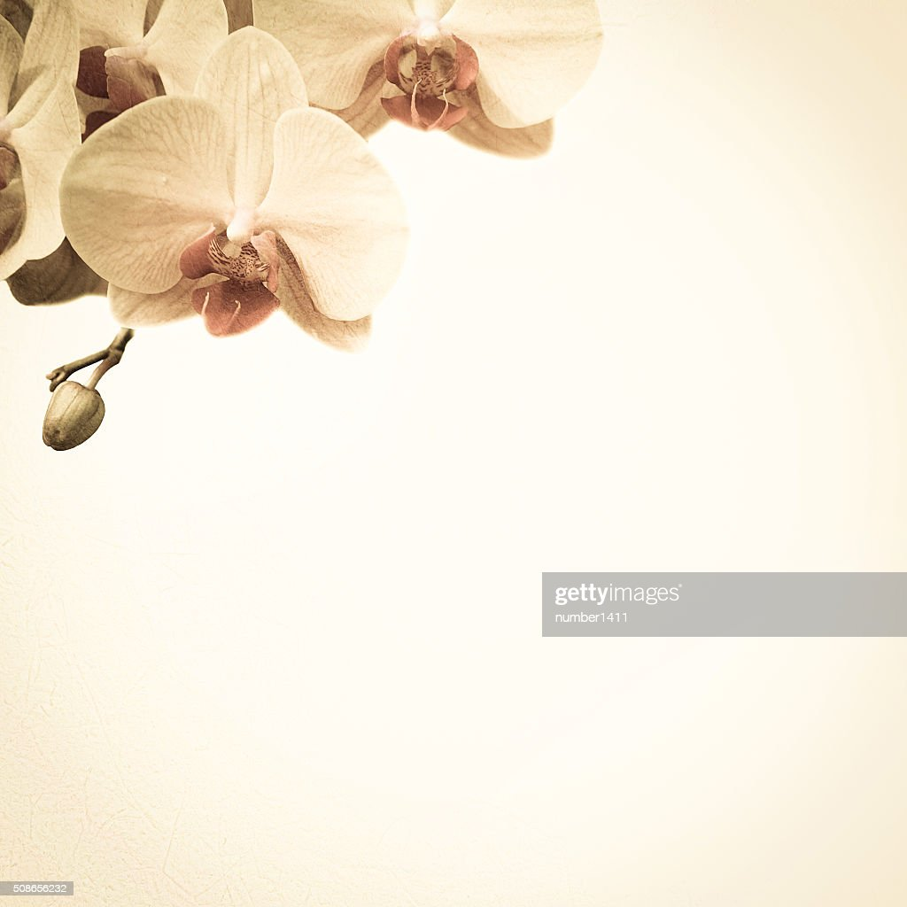 orchids in vintage color style on mulberry paper texture : Stock Photo