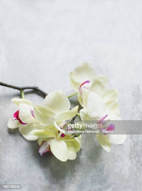 Orchids on marble effect tabletop