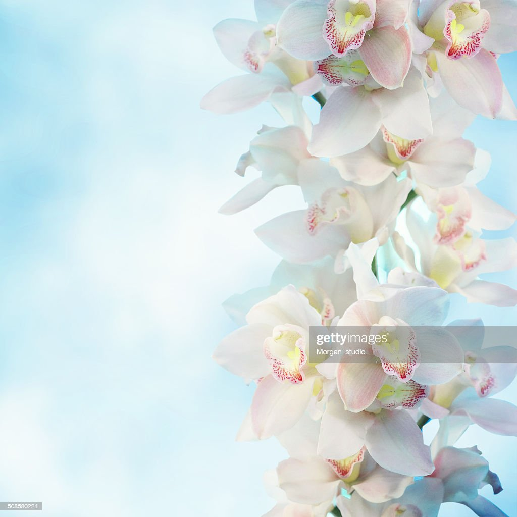 Orchideen : Stock-Foto
