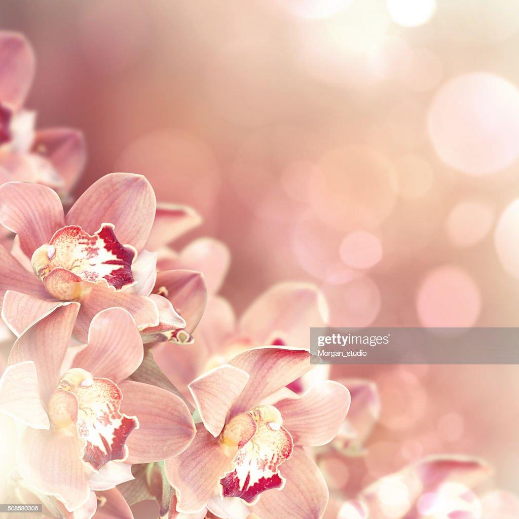 Orchidées : Photo