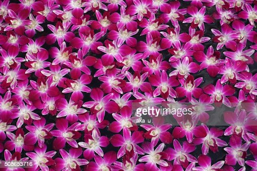Orchids : Stock Photo