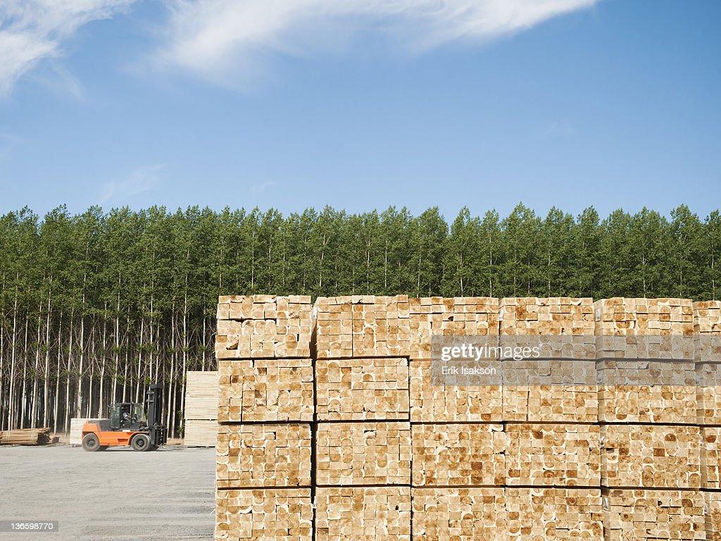 USA, Oregon, Boardman, Orderly stack of timber in tree farm