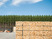 USA, Oregon, Boardman, Orderly stack of timber in tree farm