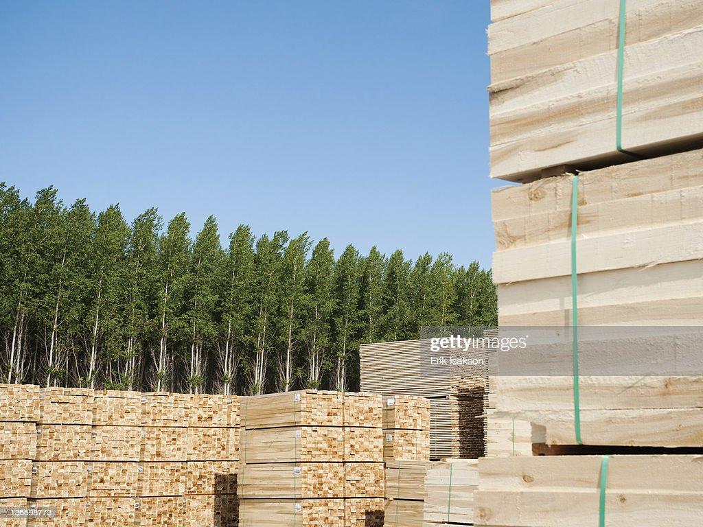 USA, Oregon, Boardman, Orderly stacks of timber in tree farm