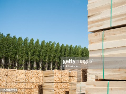 USA, Oregon, Boardman, Orderly stacks of timber in tree farm