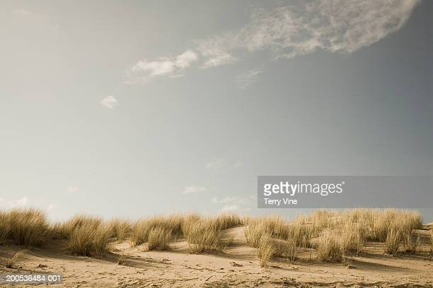 USA, Oregon, Cannon Beach, sand dunes