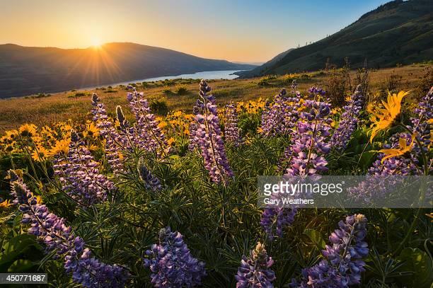 USA, Oregon, Columbia Gorge, The Dalles, Meadow