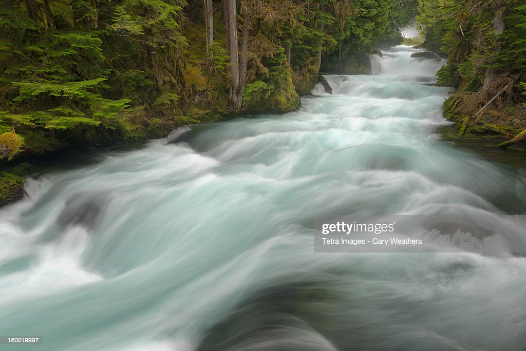 USA, Oregon, Linn County, McKenzie River