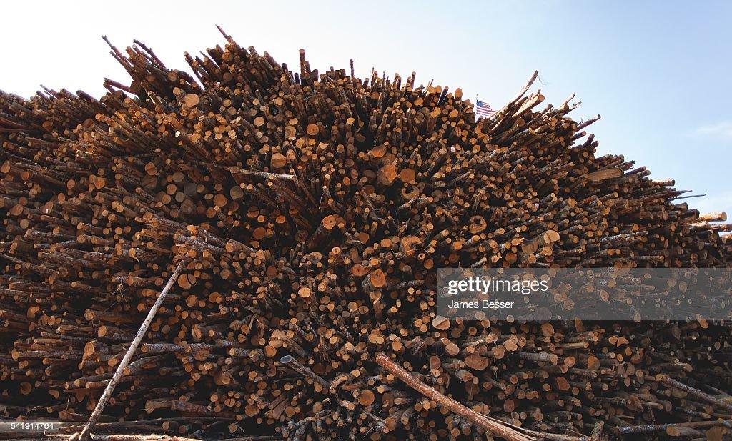 Oregon Lumber Mill