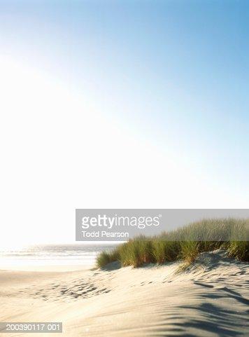 USA, Oregon, Manzanita Beach, tall grass atop sand dune
