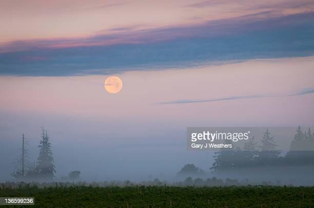 USA, Oregon, Marion County, Hop field at sunrise