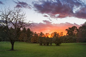 USA, Oregon, Marion County, Trees on green meadow at sunset