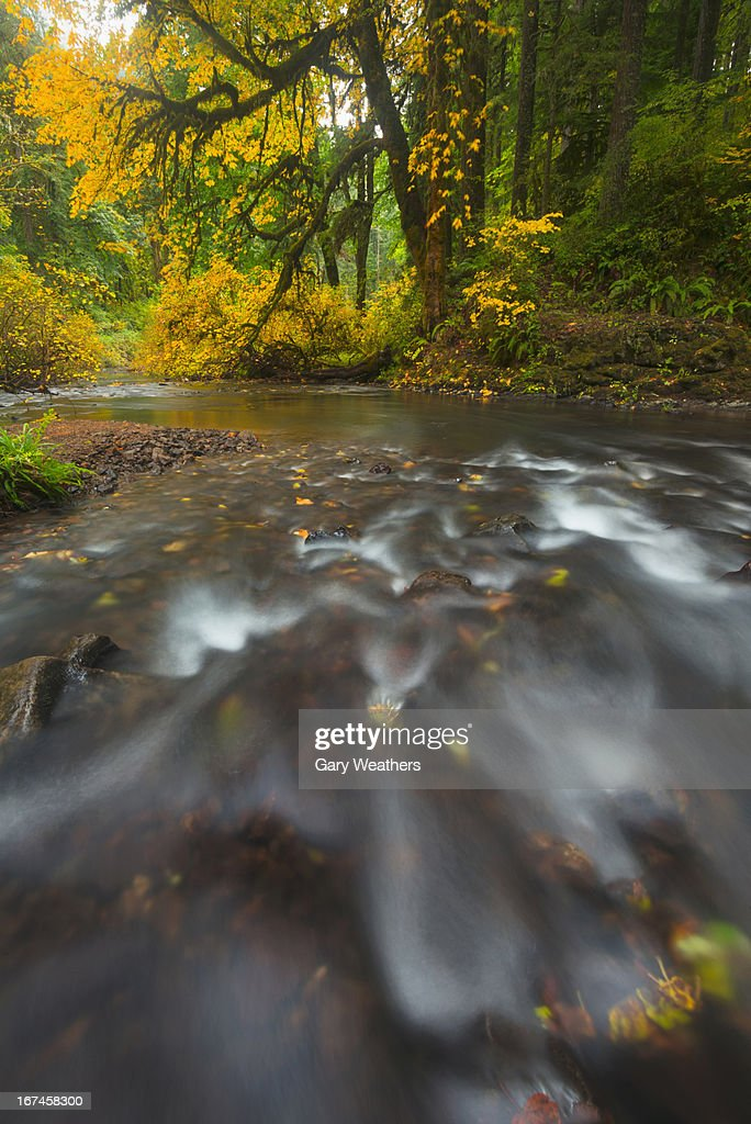 USA, Oregon, Silver Creek, Flowing stream : Stock Photo