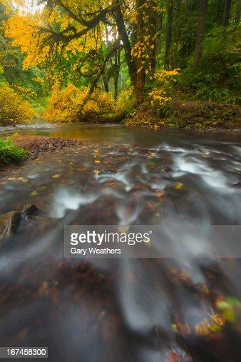 USA, Oregon, Silver Creek, Flowing stream : Stock Photo