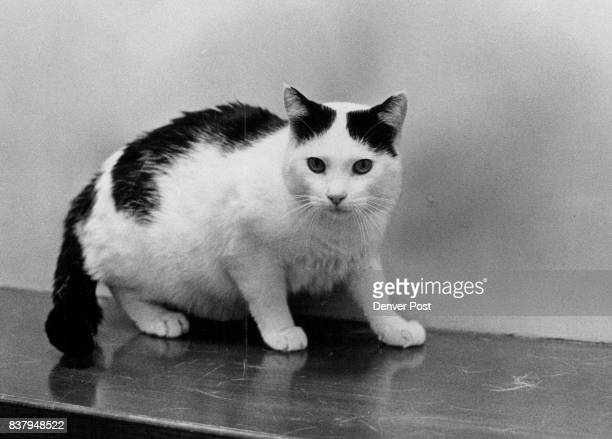 Oreo a 2½yearold neutered male is an affectionate cat who would make a good companion for children Oreo uses his litter box gets along well with...
