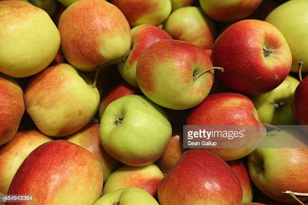 Organic apples lie on display among fruits and vegetables at the Liebherr stand at the 2014 IFA home electronics and appliances trade fair on...