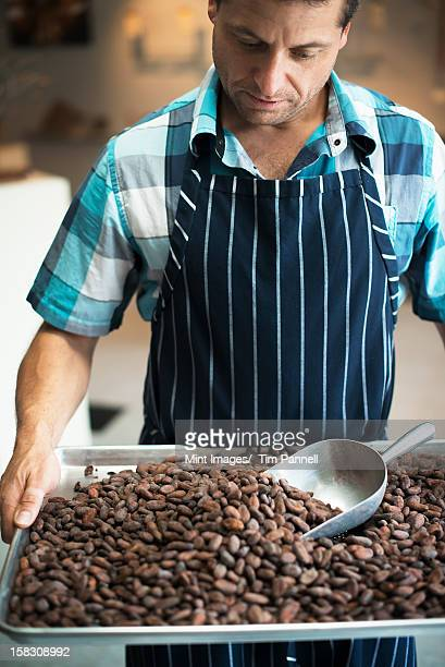 Organic Chocolate Manufacturing. A chocolatier with a tray of cocoa beans, the seed of Theobroma cacao.