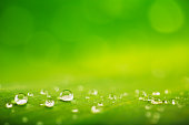 Green leaf and water drops close-up, natural green conception