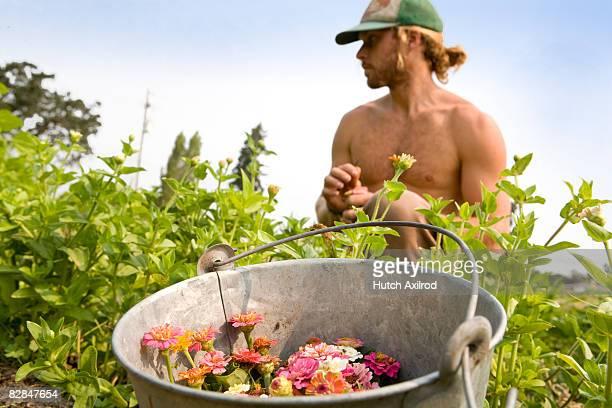 Organic Family Farmers Harvest