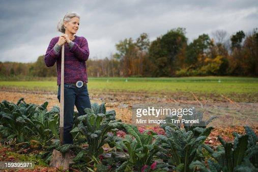 Bio-Bauernhof bei der Arbeit. Eine Frau schiefen auf einer Hacke unter