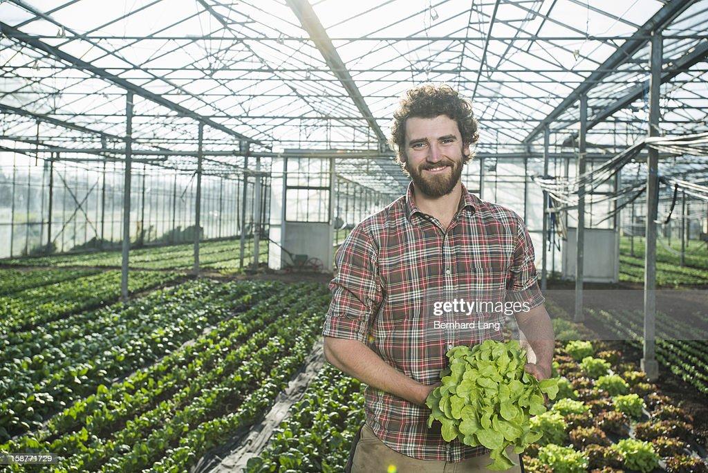 Organic farmer holding salad in a greenhouse
