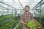 Organic farmer holding salad in a greenhouse