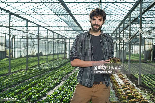 Organic farmer holding salad in greenhouse