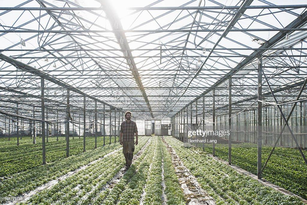 Organic farmer walking through greenhouse