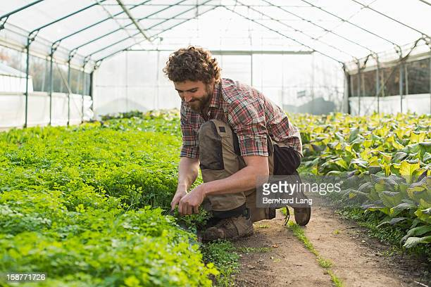Organic farmer works on a sustainable farm