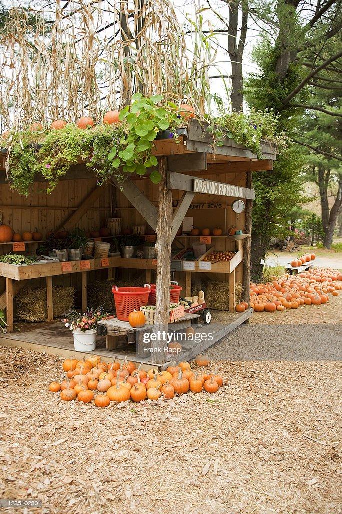 Organic farmstand, Dover, MA : Stock Photo