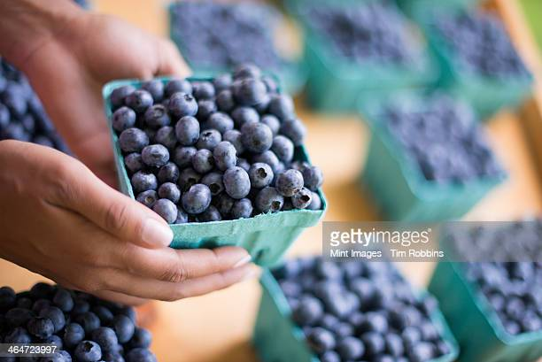 Organic fruit displayed on a farm stand. Blueberries in punnets.