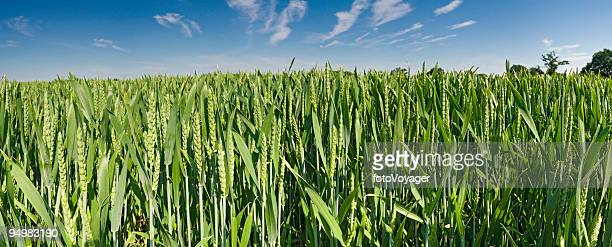 Organic green crop growing